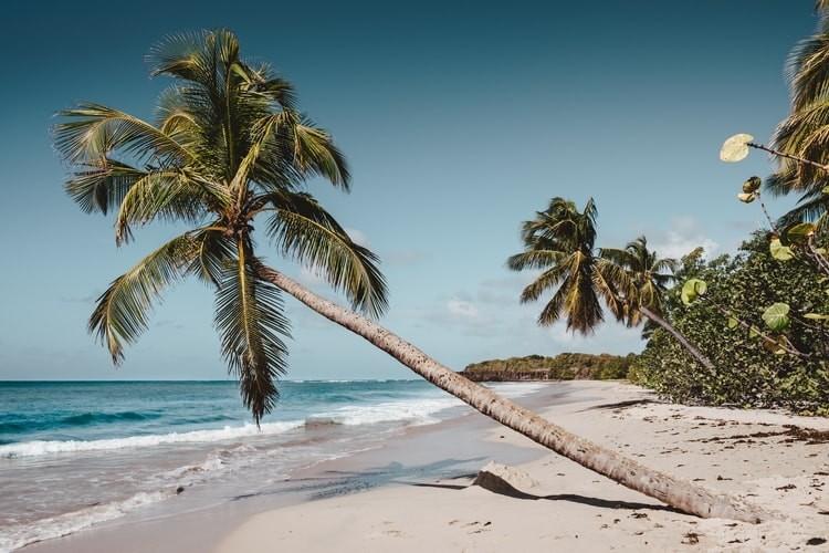 Découvrir la Martinique