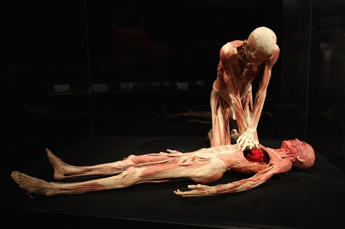 body worlds berlin